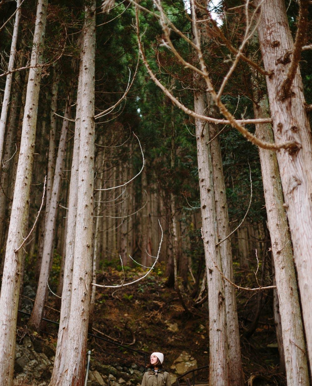 Forest Yudanaka Travel Photography
